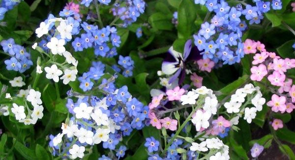 y nghia hoa luuly8